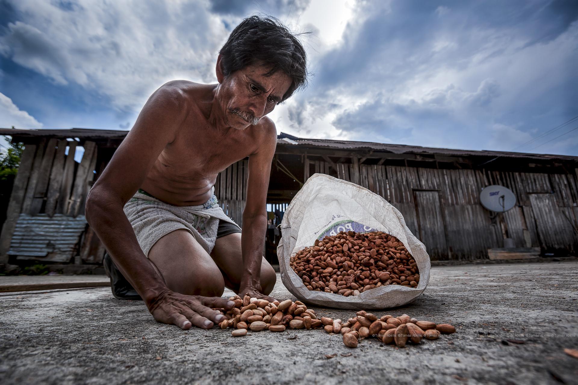 Saving Mexican criollo cocoa (Royal Cocoa of Soconusco)
