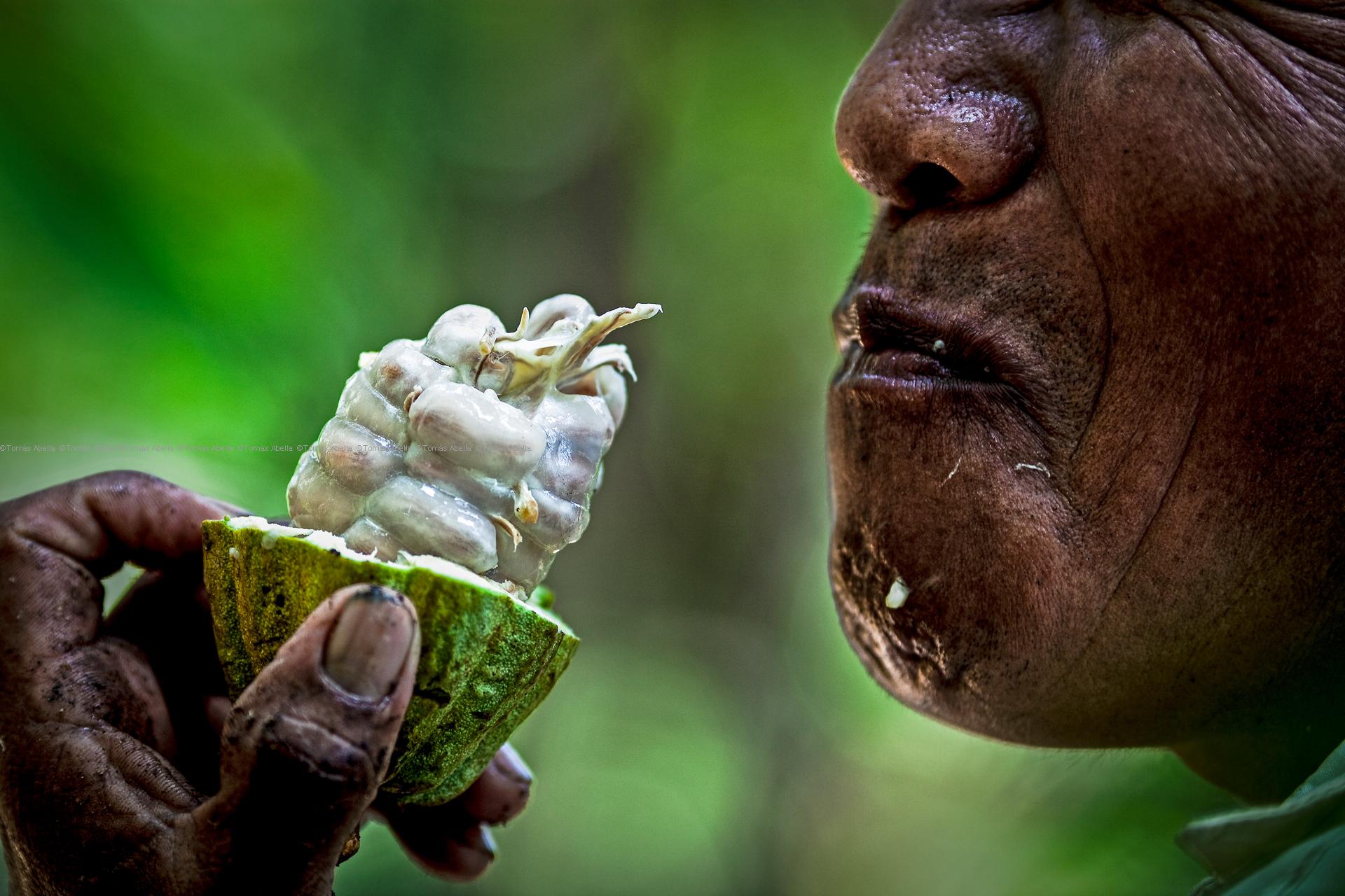 Mexico_cocoa